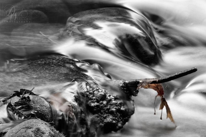David Williams Photography Wordless Wednesday 12.21.11