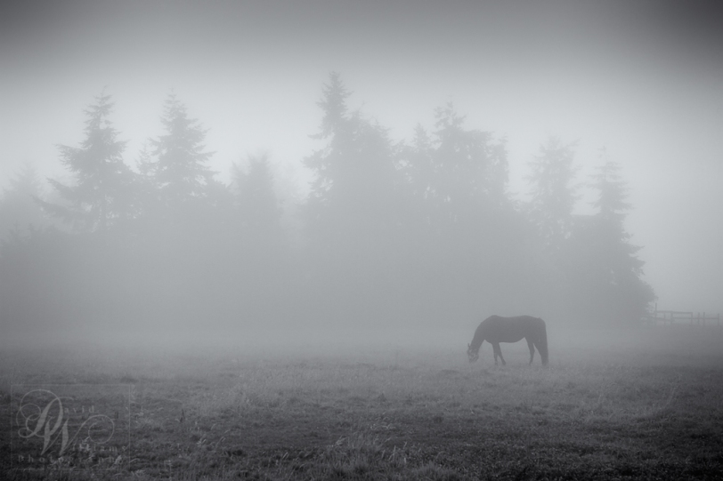 David Williams Photography One Foggy Morning