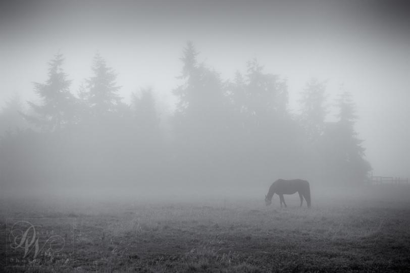 David Williams Photography One Foggy Morning