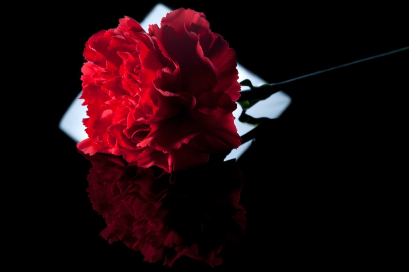David Williams Photography Reflection of Red Flower