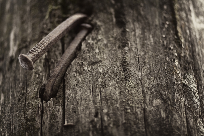 David Williams Photography Portrait of Nails