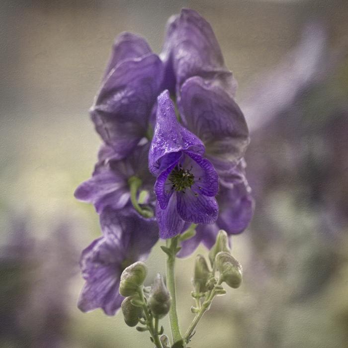 David Williams Photography Flower Texture Thursday