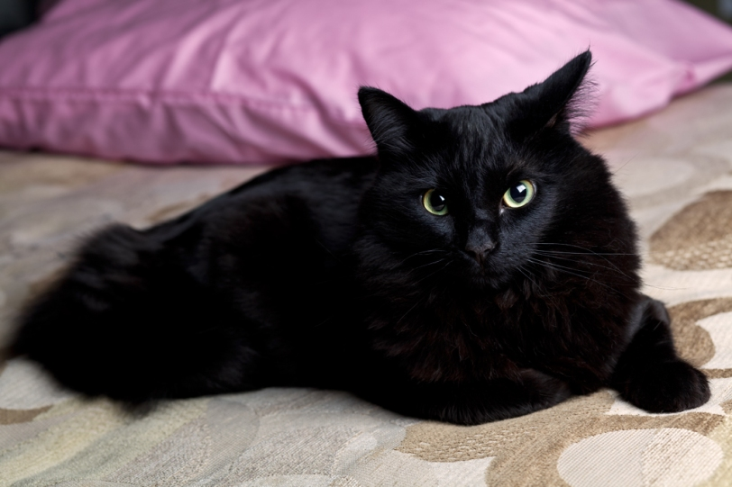 David Williams Photography Eggerooooski Pet Cat