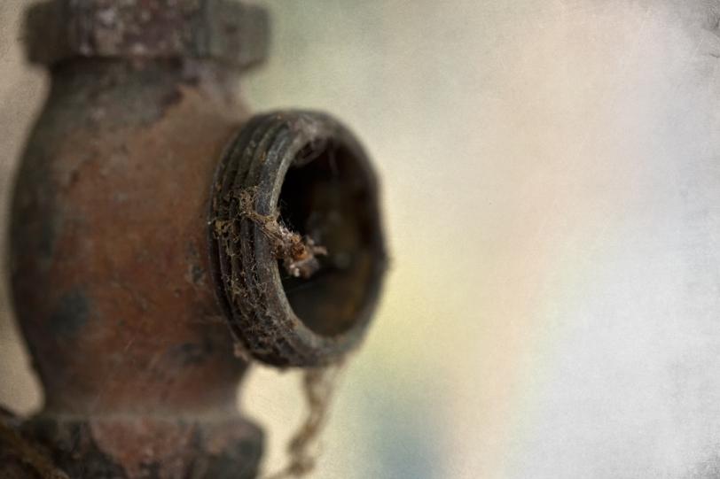 David Williams Photography Texture Thursday ~07.12.12~