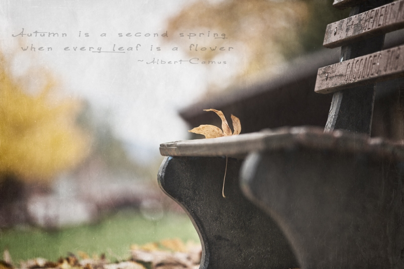 David Williams Photography Autumn Is A