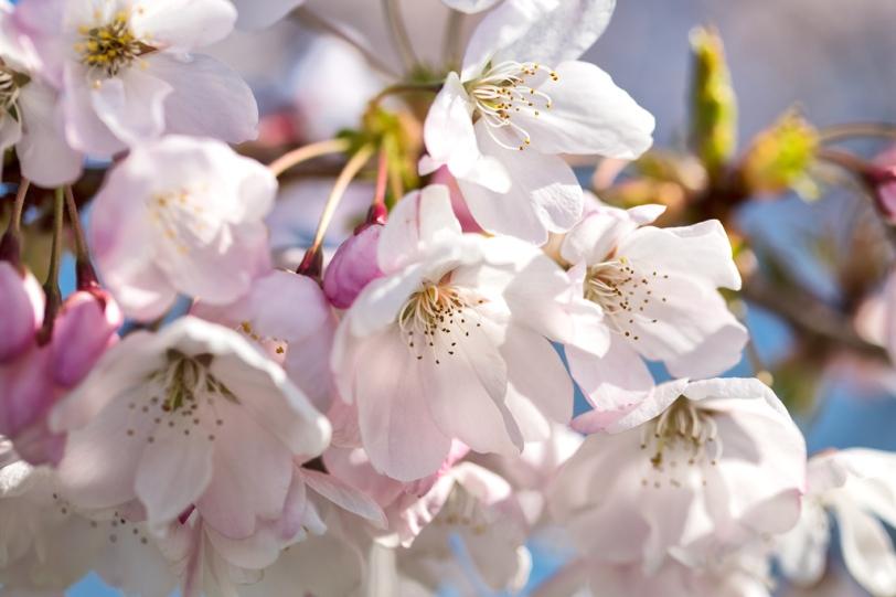 David Williams Photography Blossom
