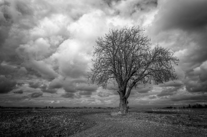 David Williams Photography Tree
