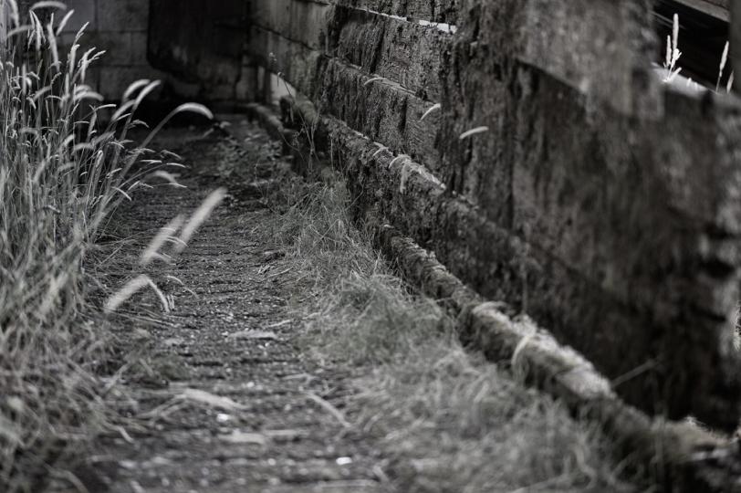 David Williams Photography Path