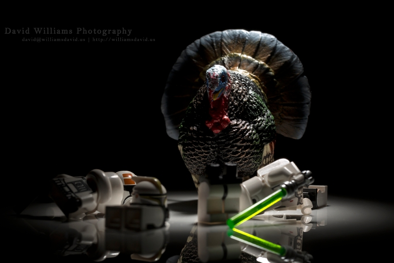 David Williams Photography The Turkey
