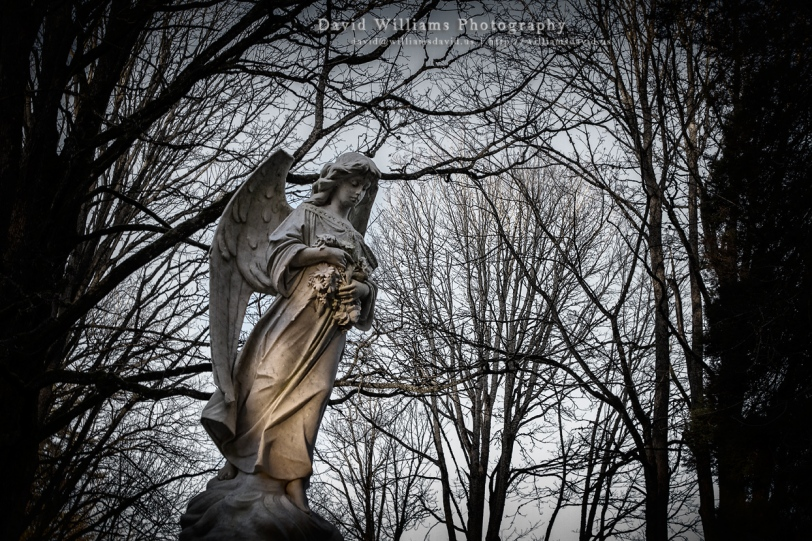 David Williams Photography Weeping Angel